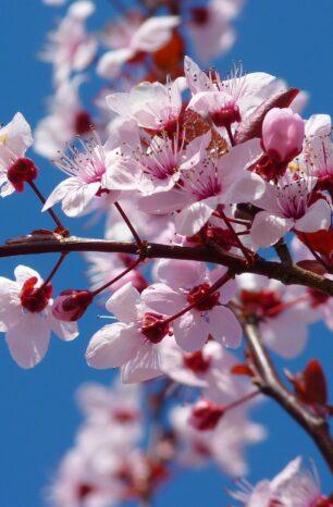 Pollen – Zwischen Blüte und Qual